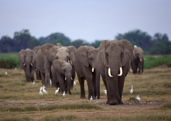 فیلها به یکدیگر دلداری میدهند!