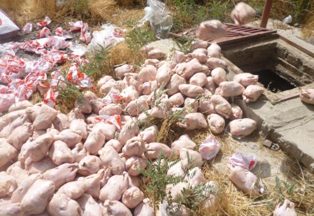 نزدیک به یک تن مرغ فاسد در کابل از بین برده شد
