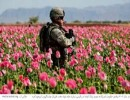 راهبردهای فعلی مبارزه با مواد مخدر در سطح منطقه و بین المللی جوابگو نیست